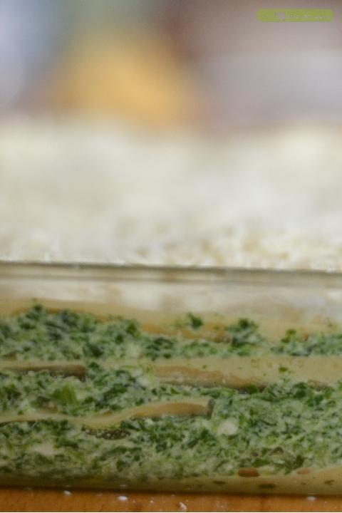 lasagne-brousse-epinard-1
