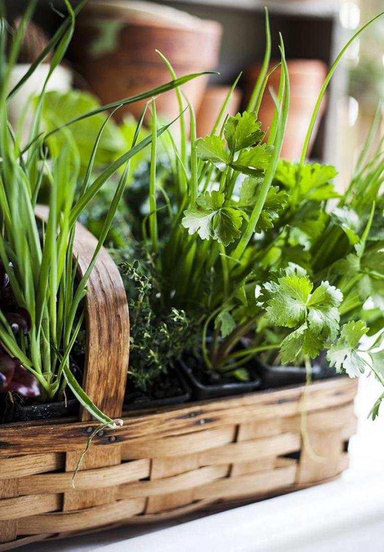 idee-jardiniere-balcon-potager